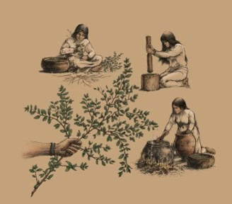 Foodways of Native Floridians
