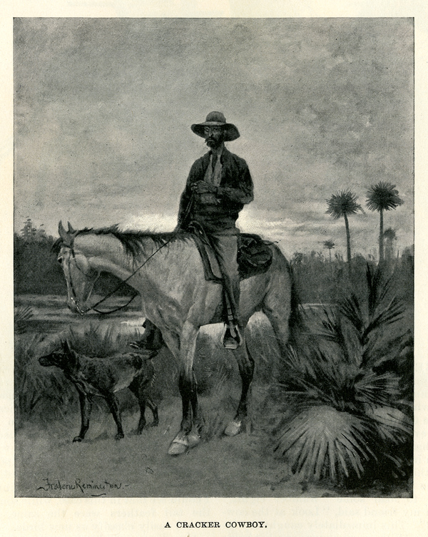 Cattle in Florida